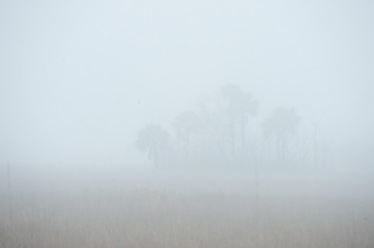 Fog, Palms, and Prairie - Big Cypress National Preserve, Florida