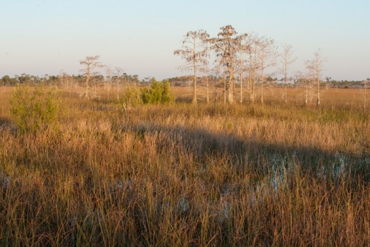 Evening in the Everglades - Everglades National Park, Florida