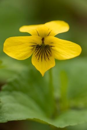 Unidentified Flower - Robert H. Treman State Park, Ithaca, New York